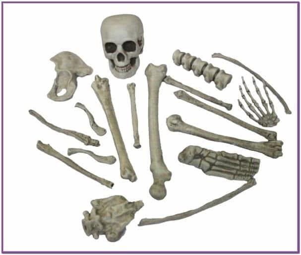 Кости скелета 18 шт