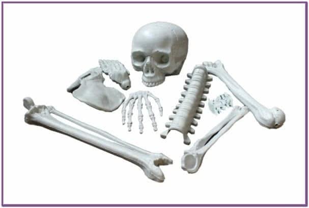 Кости скелета 9 шт