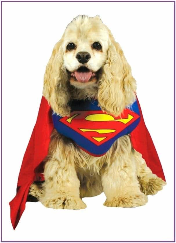 Костюм супермена для собаки
