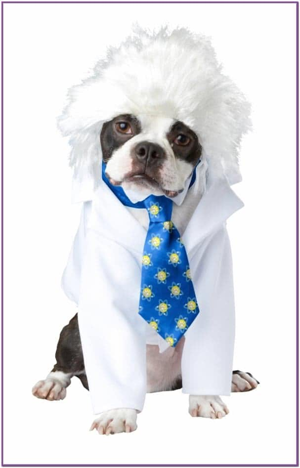 Костюм ученого для собаки